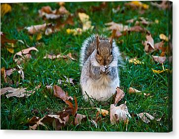 Squirrel Canvas Print - Squirrel Eating Nut On Colorful Green Grass And Brown Leaves by Aaron Sheinbein