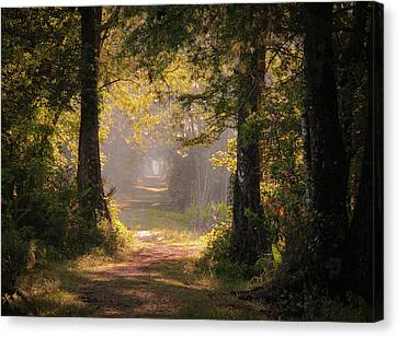 Swamp Trail Canvas Print