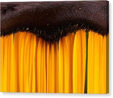 The Curtains Canvas Print by Jouko Lehto