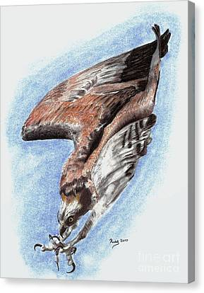 Osprey Canvas Print -  The Descent by Russ  Smith