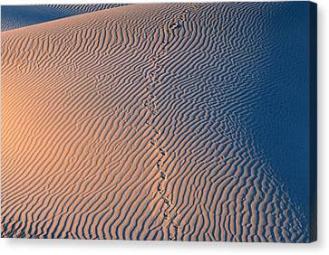 Tracks At First Light In Death Valley Canvas Print by Sandra Bronstein