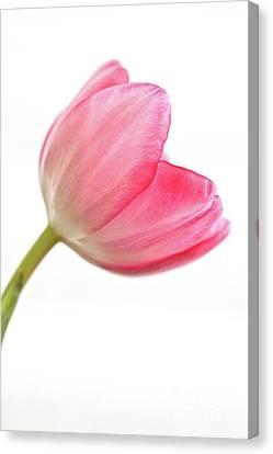 Tulip Acropolis Canvas Print by John Edwards