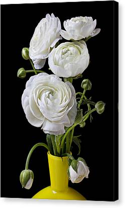 White Ranunculus In Yellow Vase Canvas Print