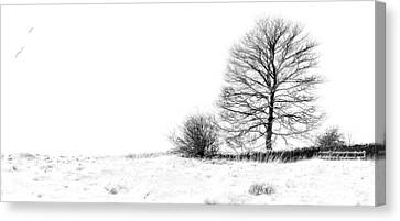 Winters Grip At Bradgate Park Canvas Print by Linsey Williams