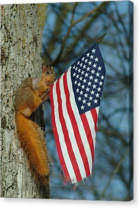 010510-4   One Patriotic Squirrel Canvas Print by Mike Davis