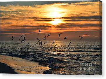 0221 Gang Of Gulls At Sunrise On Navarre Beach Canvas Print