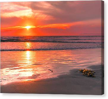 0359 Canvas Print by Mikes Nature