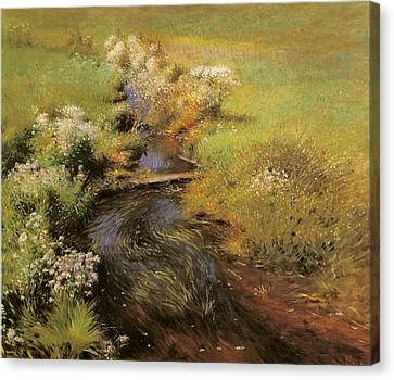 Wild Asters Canvas Print by Dennis Miller Bunker