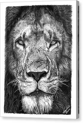 059 - Lorien The Lion Canvas Print