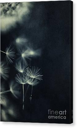 Splatters Of Blue 1 Canvas Print by Priska Wettstein