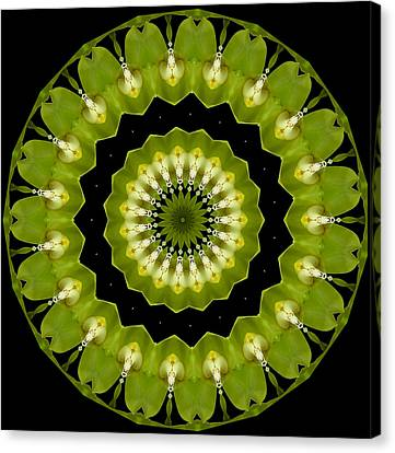 Canvas Print featuring the photograph 19-petaled Lucky Shamrock by Baha'i Writings As Art