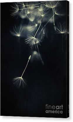 Splatters Of Blue 2 Canvas Print by Priska Wettstein