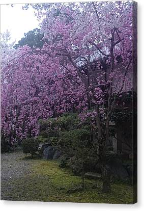 Shidarezakura Mean A Drooping Cherry Tree  Canvas Print