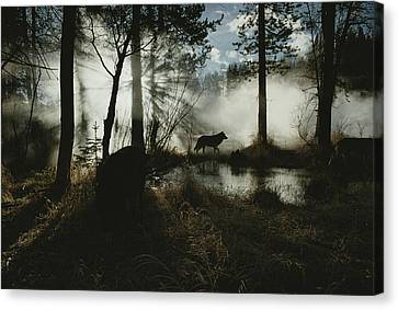 A Gray Wolf, Canis Lupus, In Silhouette Canvas Print by Jim And Jamie Dutcher