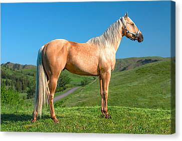 A Horse Named Shaker Canvas Print by Todd Klassy