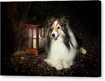 Shetland Sheepdog Canvas Print - A Light In The Darkness by Pat Eisenberger