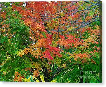 Canvas Print featuring the photograph A Michigan Fall by Robert Pearson