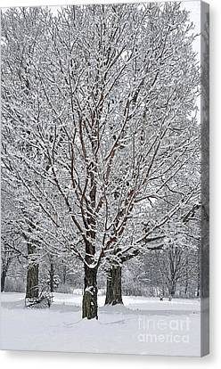 A Poem As Lovely Canvas Print by Diane E Berry
