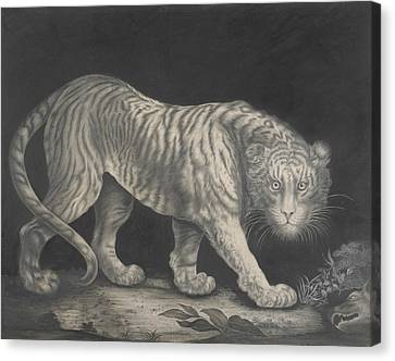 A Prowling Tiger Canvas Print