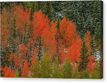 A Splash Of Color Canvas Print by Bill Sherrell
