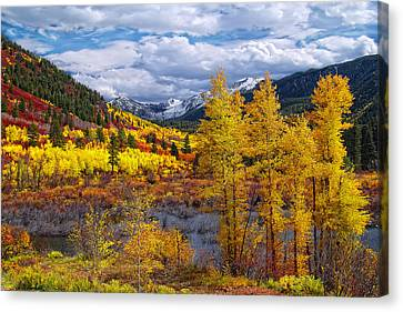 A Symphony Of Colors Canvas Print