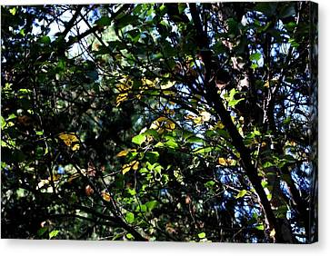 Canvas Print featuring the photograph A Touch Of Autumn by Marilynne Bull