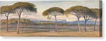 A View Of The Pine Woods Above Cannes Canvas Print