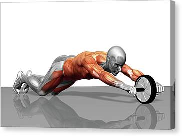 Human Body Part Canvas Print - Ab Wheel Exercise by MedicalRF.com