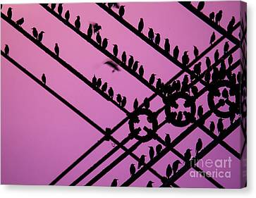 Risk Society Canvas Print - Aberystwyth Pier And Starlings At Dusk by Keith Morris