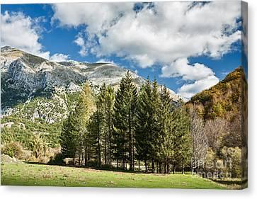 Alberi Canvas Print - Abruzzo National Park, Italy by Luigi Morbidelli