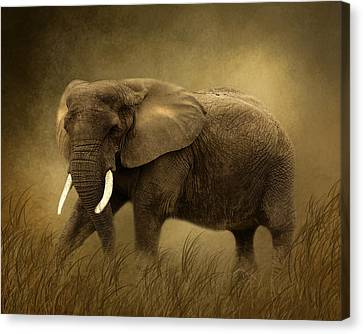 African Elephant Canvas Print by TnBackroadsPhotos
