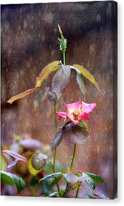 After The Rain Canvas Print by Joan Bertucci