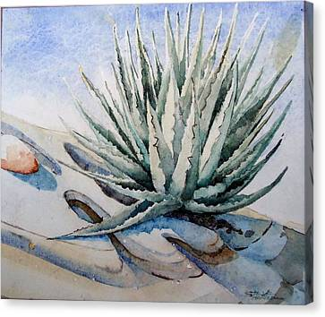 Agave Canvas Print by Steven Holder