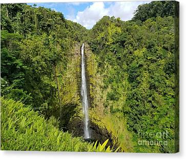 Canvas Print - Akaka Falls by Kristine Merc