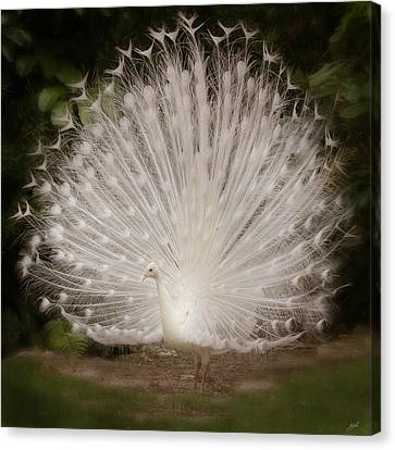 Albino Peacock  Canvas Print by Joseph G Holland