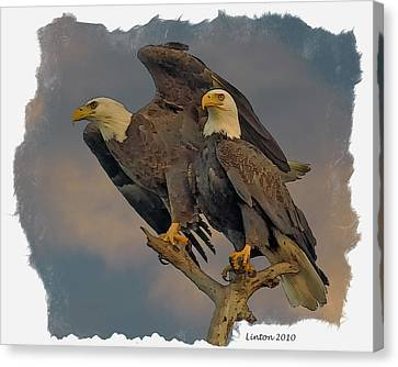 American Bald Eagle Pair Canvas Print by Larry Linton