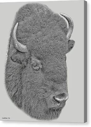 American Bison Canvas Print by Larry Linton