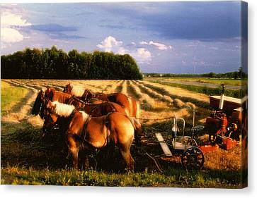 Amish Hay Rig Canvas Print by Roger Soule