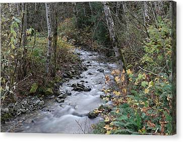 Canvas Print featuring the photograph An Autumn Stream by Jeff Swan