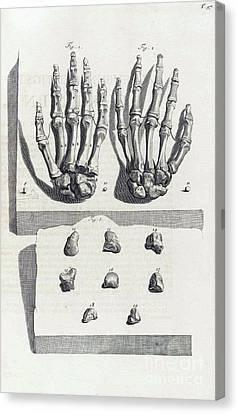1690 Canvas Print - Anatomia Humani Corporis, Table 97, 1690 by Science Source