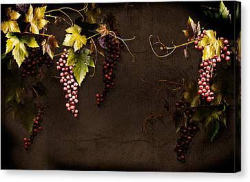 Antique Grapes Canvas Print by Marsha Tudor