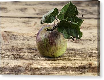 Apple Canvas Print by Nailia Schwarz