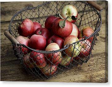 Apples Canvas Print by Nailia Schwarz
