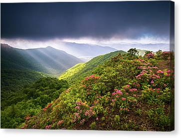 Asheville Nc Blue Ridge Parkway Spring Flowers North Carolina Canvas Print by Dave Allen