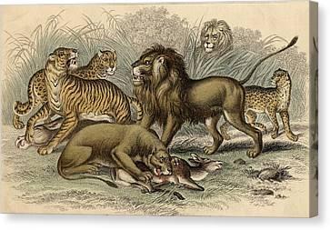 1. Asiatic Lion. 2. Lioness. 3.bengal Canvas Print by Vintage Design Pics