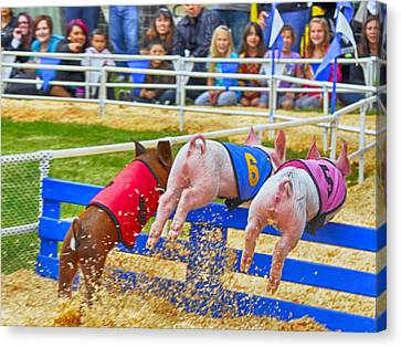Canvas Print featuring the photograph At The Pig Races by AJ Schibig