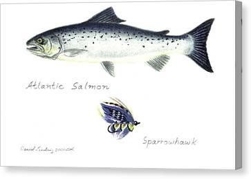 Atlantic Salmon And Sparrowhawk Fly Canvas Print