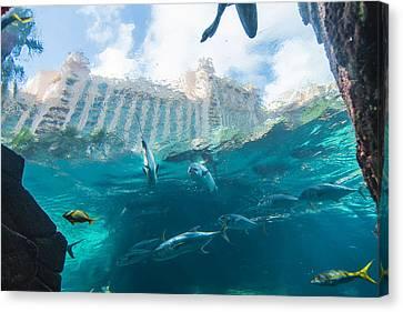 Atlantis Paradise Island - Nassau Bahamas Canvas Print by Jon Berghoff