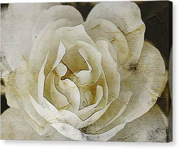 Aunt Lori's White Rose Canvas Print