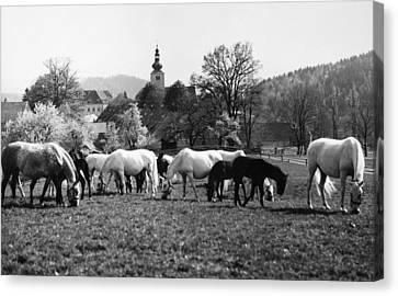 Austria: Horse Farm Canvas Print